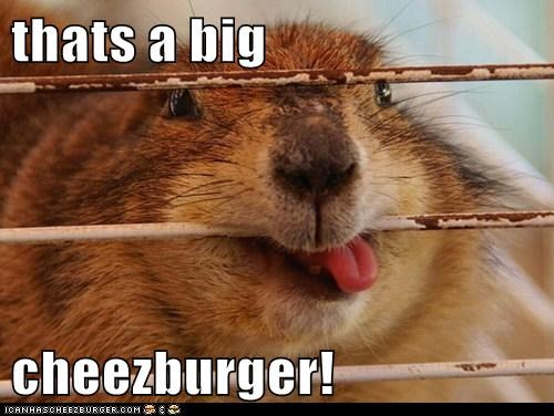 Cheezburger Image 6189030912