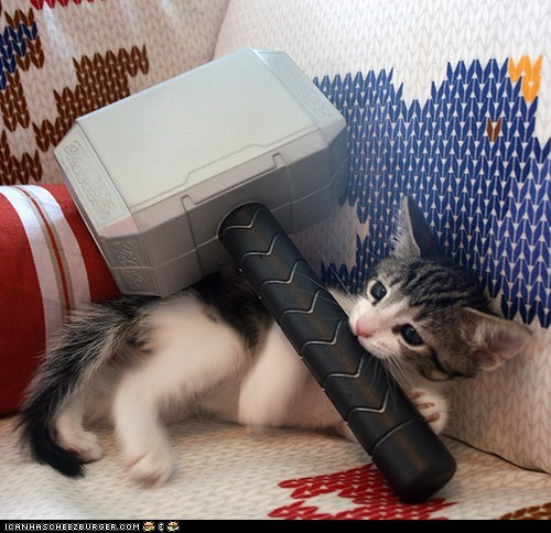 Cats,cyoot kitteh of teh day,hammer,kitten,Thor,thors-hammer,toys