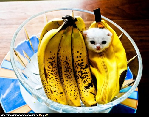 banana,bananas,Cats,cyoot kitteh of teh day,food,fruit,kitten,tiny