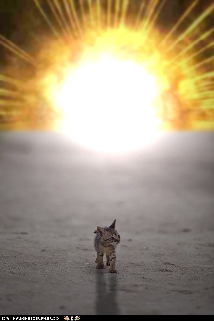 Cats cool-guys-dont-look-at-explosions cyoot kitteh of teh day explosions kitten tiny walking - 6189292032