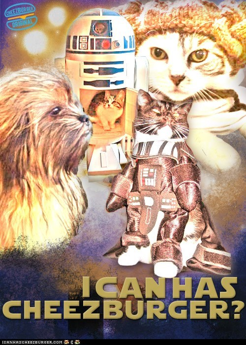 best of the week Cats dogs Hall of Fame may the fourth movies originals star wars - 6189582592