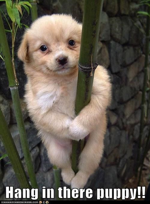 hang in there puppy!! cheezburger funny memes funny pictures