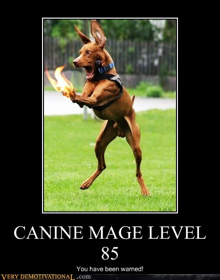 canine dogs fire hilarious mage - 6189935872