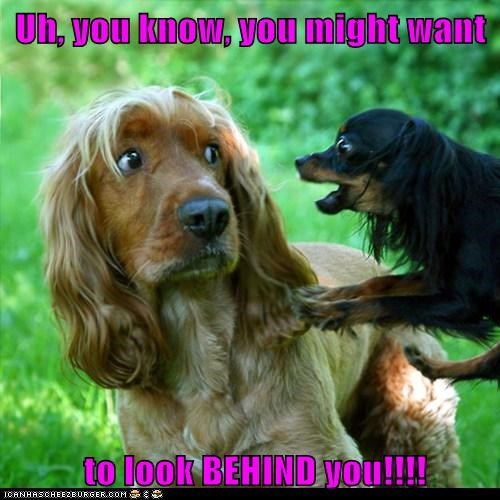 Cheezburger Image 6190116352