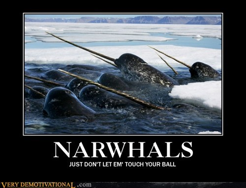 animals hilarious narwhals song - 6190382080