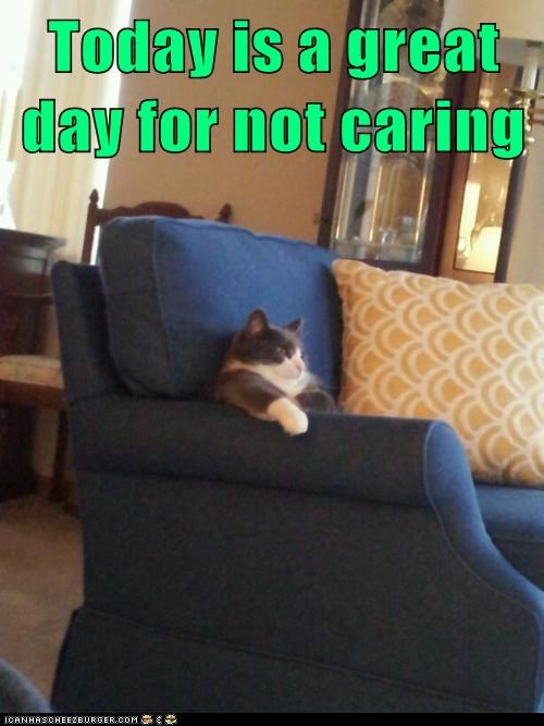 apathy Cats couch do not care dont-care Hall of Fame human-like lazy lolcats sit whatever