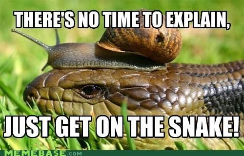 Memes no time to explain snail snake - 6191256064