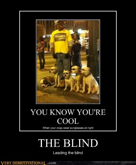 blind,dogs,hilarious,sun glasses