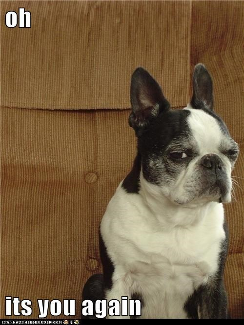 dogs french bulldogs i-dont-like-you not happy side-eye skeptical you - 6191541760