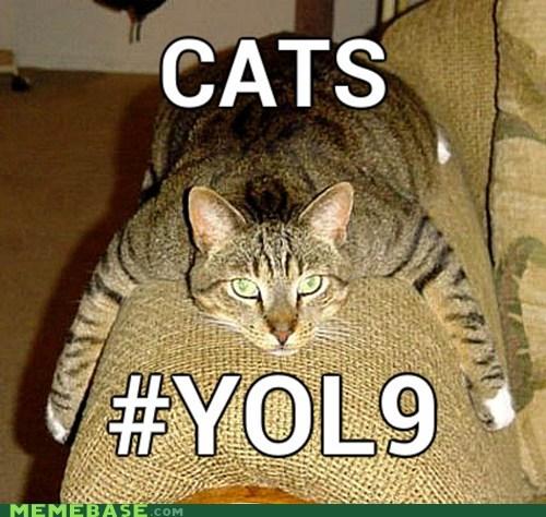 cat Memes nine lives yolo - 6191600128