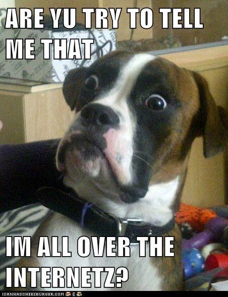 Baffled Boxer