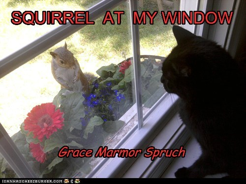 SQUIRREL AT MY WINDOW Grace Marmor Spruch