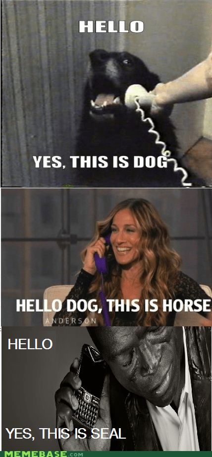 hello this is dog,horse,Memes,seal