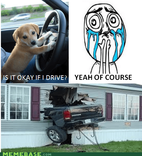 cute animals,cuteness overload,driving,FAIL,Memes
