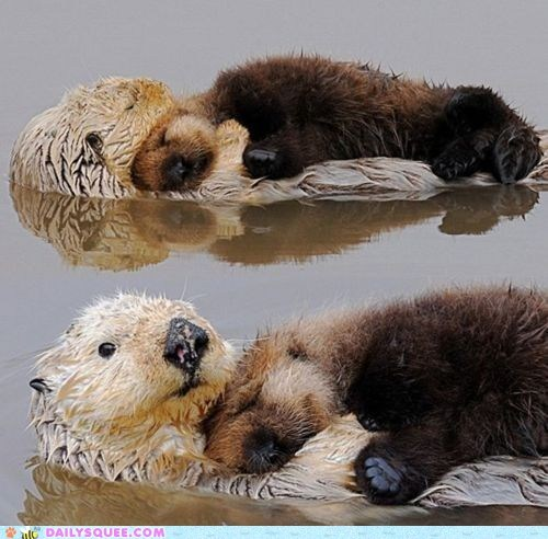 baby bed float otter otters sea otter sleep squee swim - 6192182528