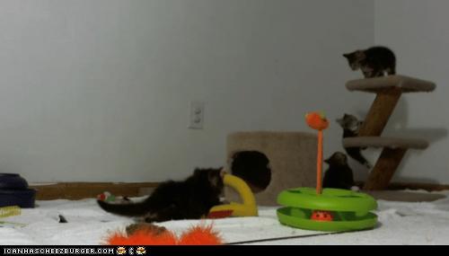 Cats cute kitten live feed Video - 6192376064