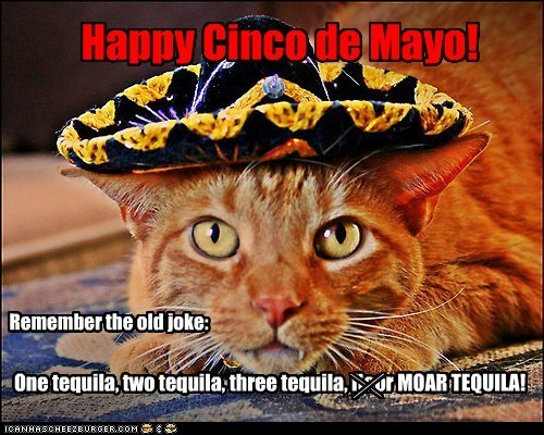 Cats cinco de mayo drinking drunk holidays jokes lolcats - 6192584448