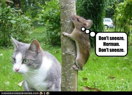 cat climbing a tree danger dont hiding mouse scary sneeze suspense - 6192701440