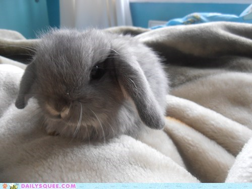 bunny happy bunday pets rabbit reader squees - 6192979456