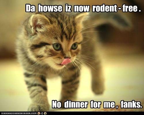 chase dinner eat hunt mouse nom Predator prey - 6193264896