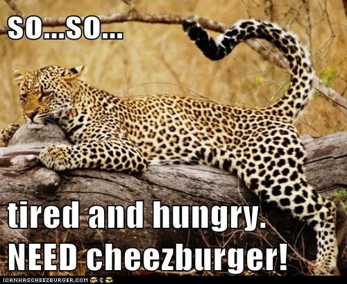 Cheezburger Image 6193574144