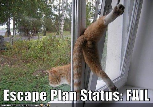 escape FAIL lolcats orange stuck windows - 619376384