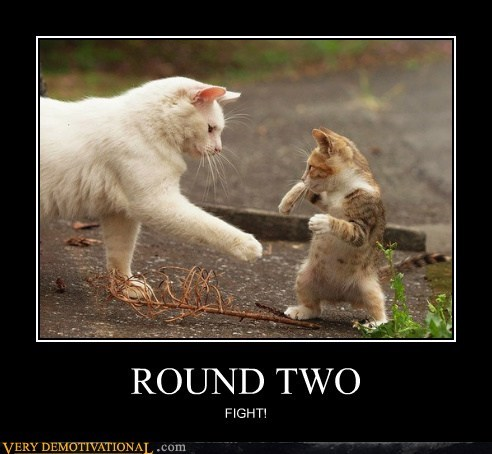 Cats cute fight Pure Awesome - 6193961216