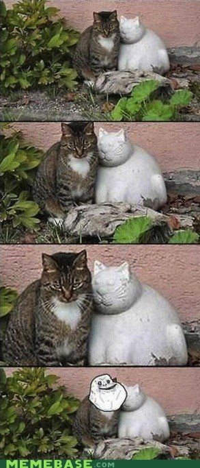 Cats forever alone IRL repost - 6194144768