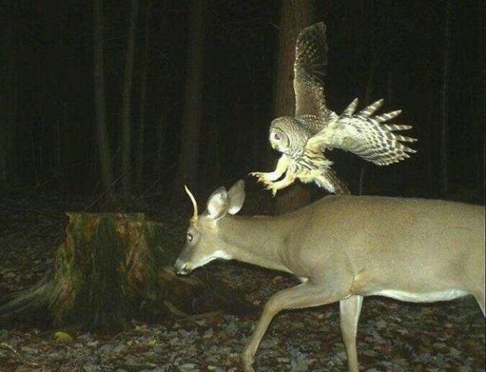 animals caught on trail cams