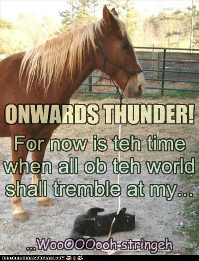 cat,distracted,horse,onwards,string,take over,tremble,world