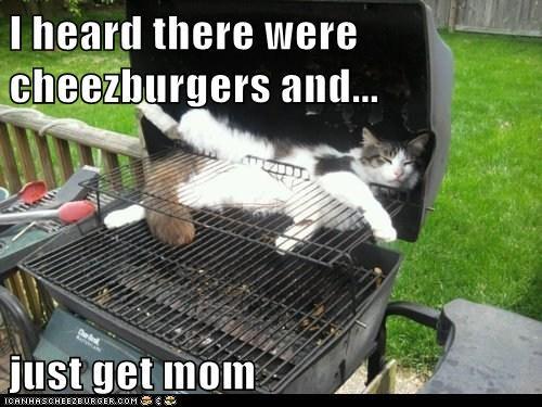 Cheezburger Image 6195282432