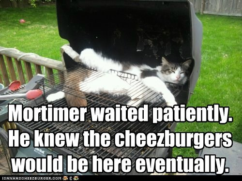 Cheezburger Image 6195372544