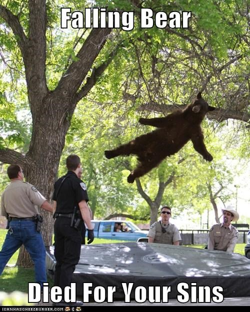 bears,political pictures,trampoline