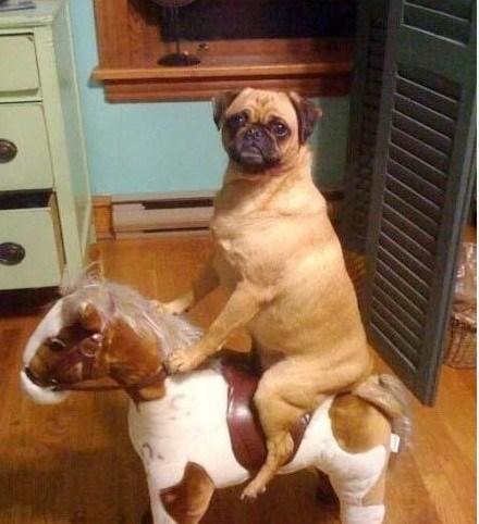 cute animals dogs dog riding a horse Photo Sundog - 6197741568