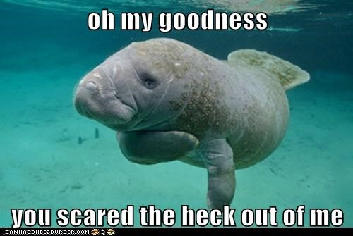 goodness hand to heart heart attack manatee manatees omg scared sneak up on me - 6197899264