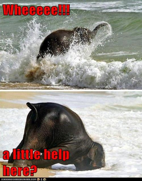 elephant,faceplant,falling,help,ocean,stuck,water,wave
