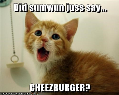 Cheezburger Image 6198916096