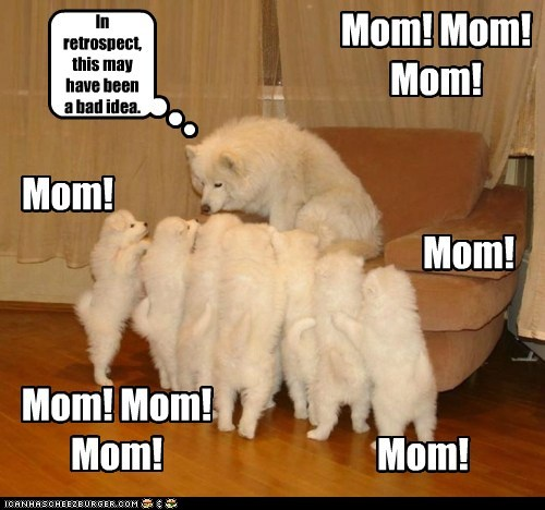 dogs mommy puppies samoyed - 6198976768