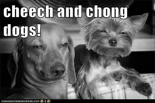 dachshund dogs stoned dog yorkie - 6199537152