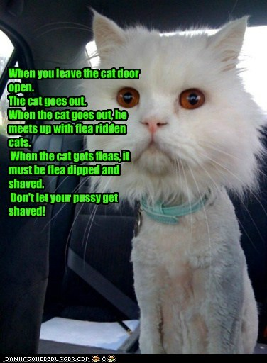 When you leave the cat door open. The cat goes out. When the cat goes out, he meets up with flea ridden cats. When the cat gets fleas, it must be flea dipped and shaved. Don't let your pussy get shaved!