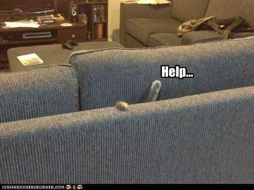 couch,eat,Hall of Fame,halp,help,paws,sofa,stuck