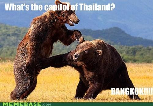 bears,bangkok,thailand,dangerous