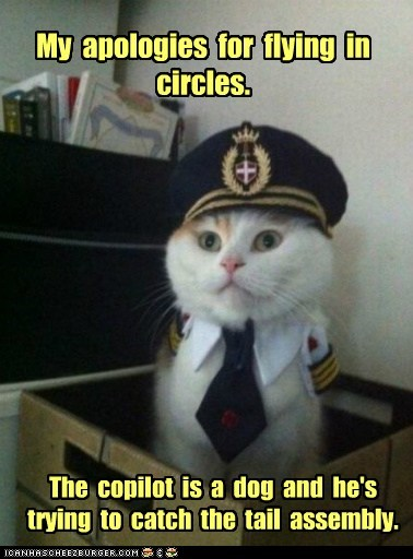 Captain Kitteh Cats chasing your tail circles dogs Hall of Fame Memes pilots planes