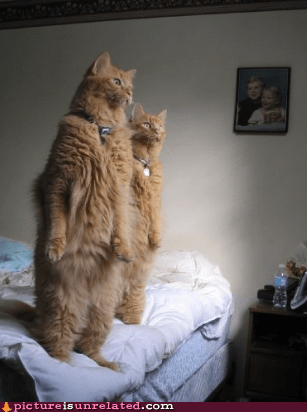 Cats human standing wtf - 6200547840