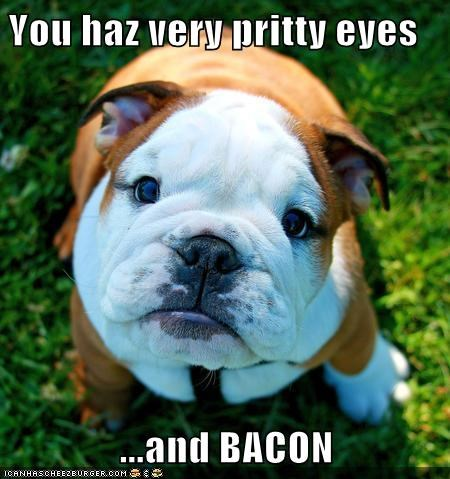 bacon beautiful best of the week bulldog dogs flattering Hall of Fame - 6200641024