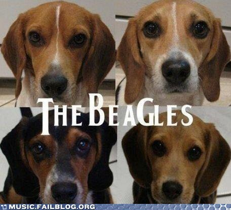 animals beagles beatles dogs the Beatles - 6200861184