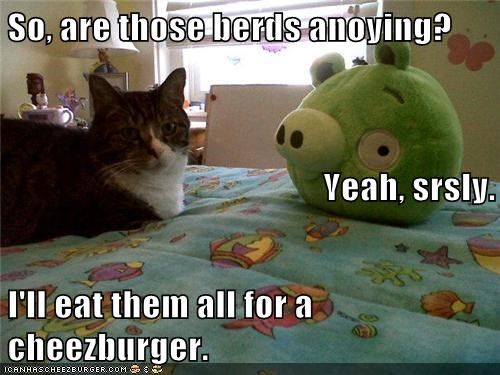 Cheezburger Image 6200981504