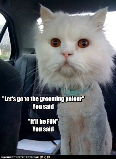 """""""Let's go to the grooming palour"""" You said """"It'll be FUN"""" You said"""
