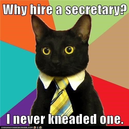 Business Cat Cats kneading Memes need puns secretary - 6201507840