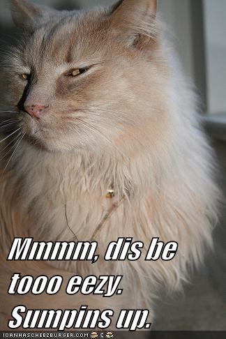 Cheezburger Image 6201543168